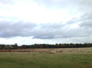 For that city feel, live near Richmond Park. Free and easy mingling with the ungulates.